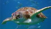 Kaplumbağa Otoyolu